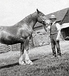 Old Photo Of Horse